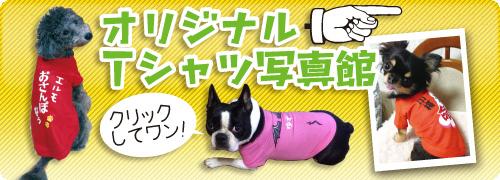 ひだT.comのオリジナル犬用Tシャツ