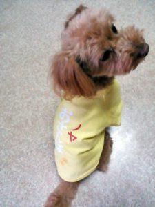 犬用オリジナルTシャツ