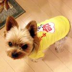 オリジナル犬用Tシャツ