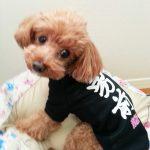 オリジナル犬Tシャツ
