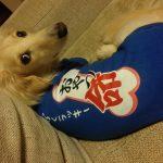 犬オリジナル用Tシャツ