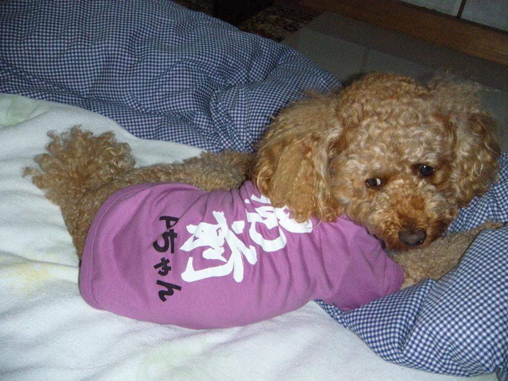 犬Tシャツ