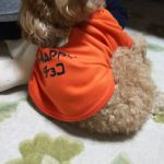 犬Tシャツ写真館