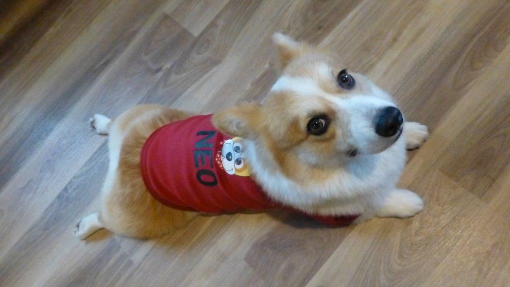 名入れ犬用Tシャツ