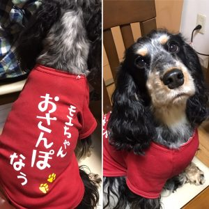 犬用Tシャツ 名入れ写真