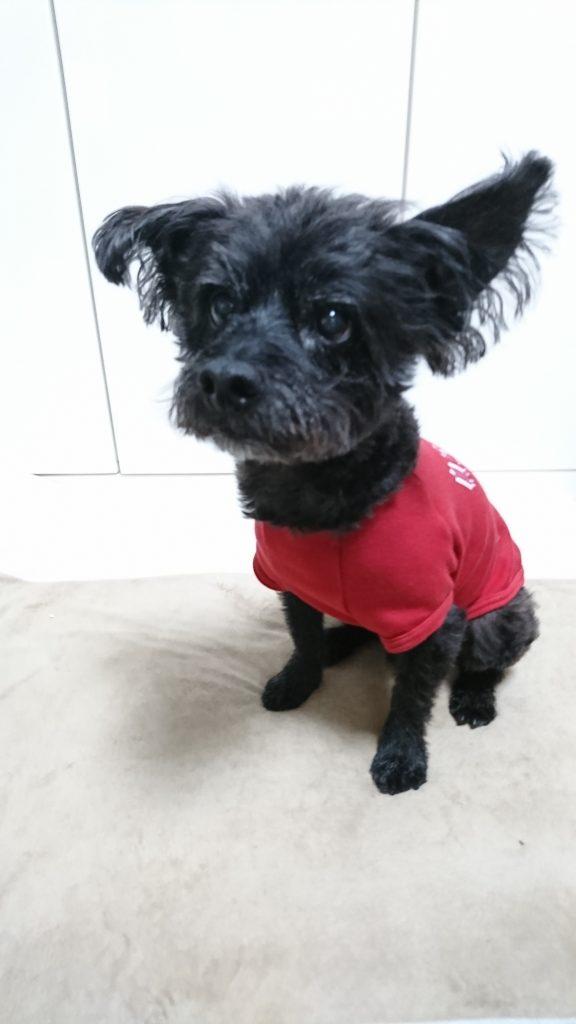 犬用Tシャツ 名入れ 自宅警備員