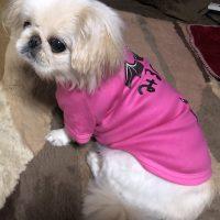 オリジナル犬用名入れTシャツ