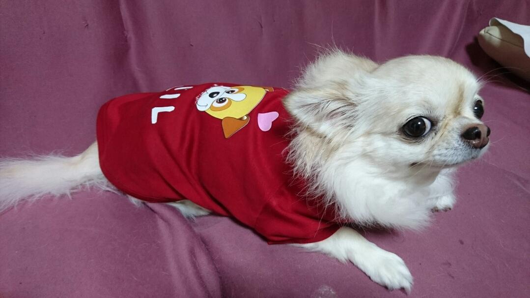 名入れ 犬用Tシャツ
